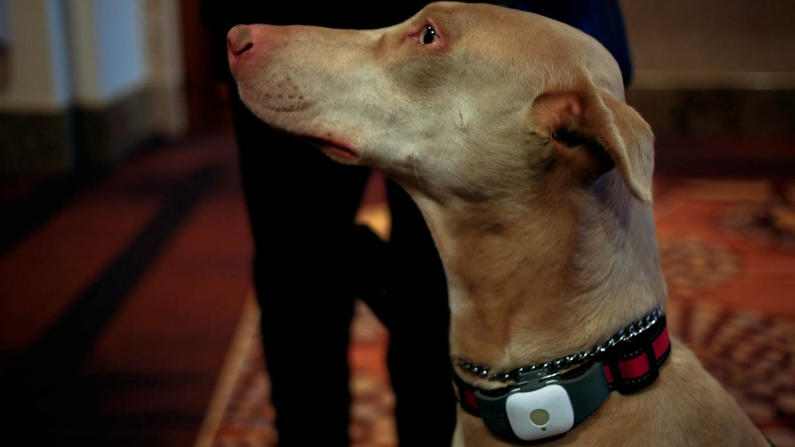 CES 2015 And The Internet of the Dog Thanks To Tagg GPS Plus