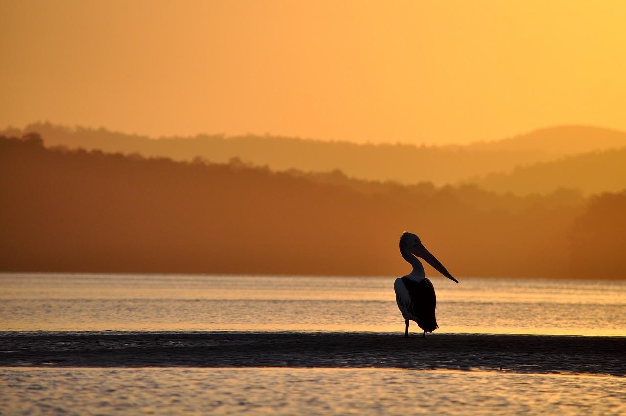 pelican-1327004_1280