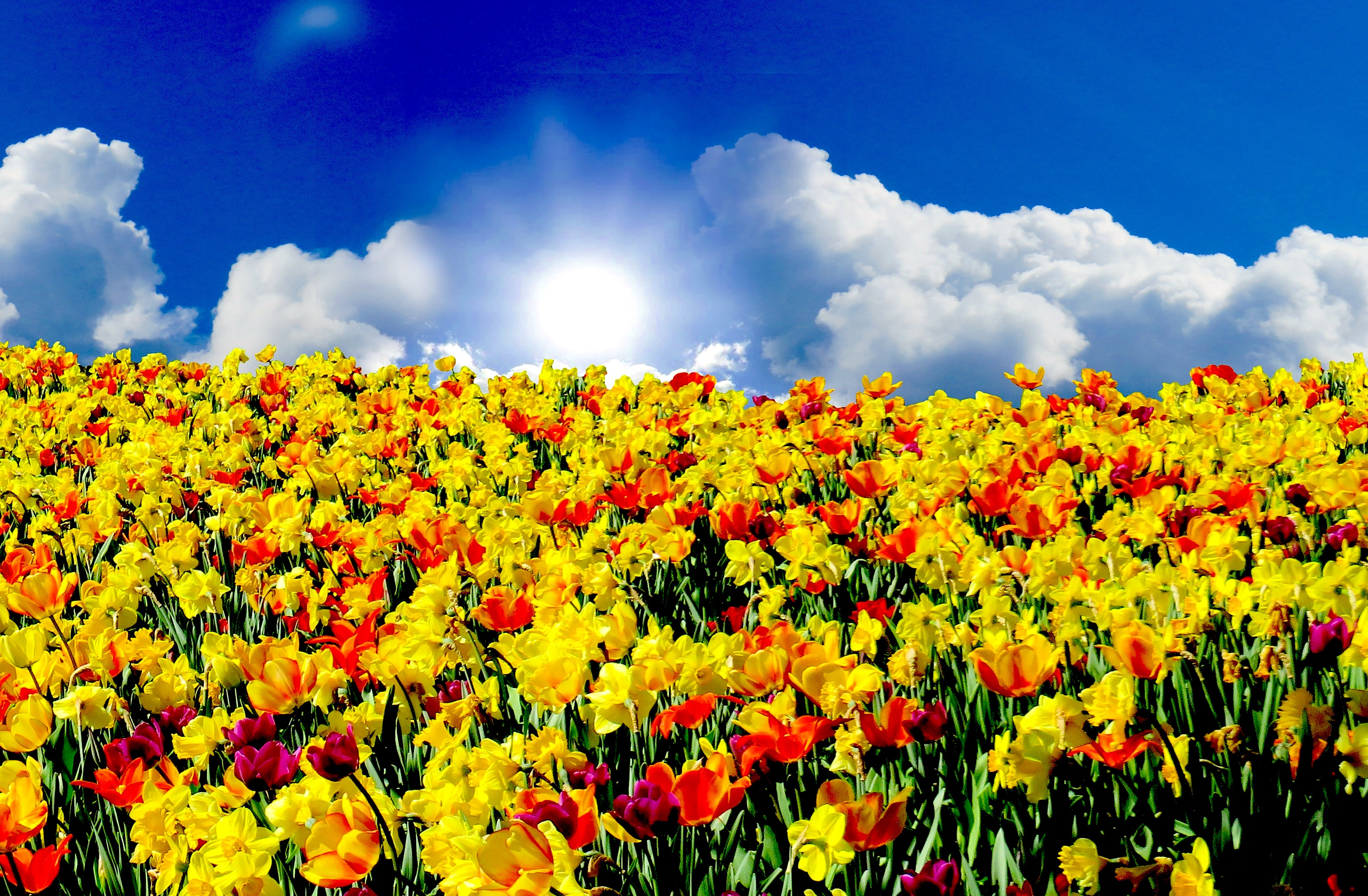 As hybrids flower, a new era dawns in cloud computing