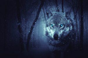 wolf-2227541_1280