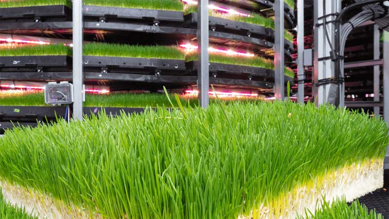 Grōv and AWS collaborate on vertical farming to grow animal feed